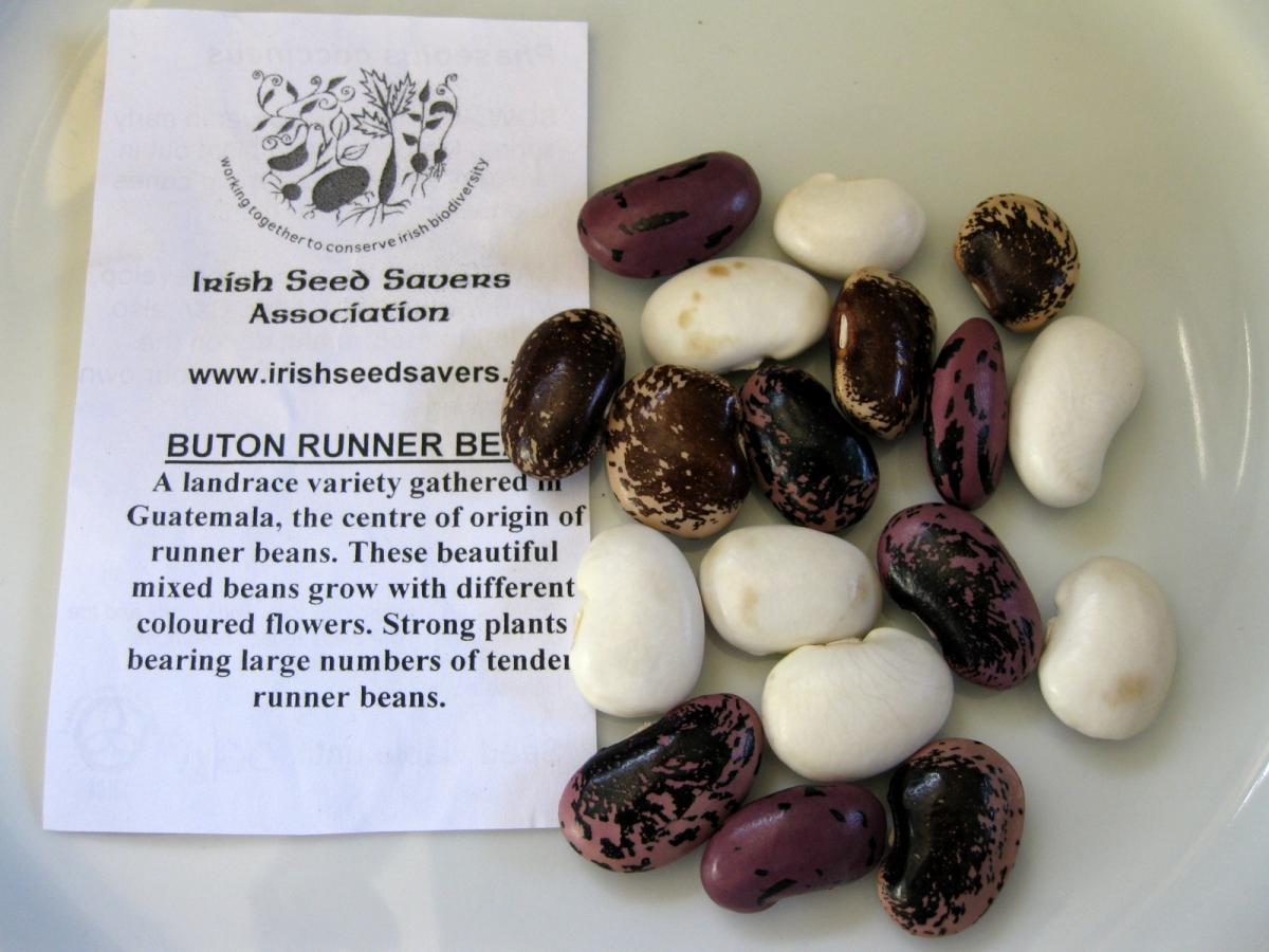 Buton multi coloured beans 2009-10